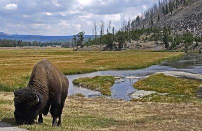 Zakladi, ki jih skriva Yellowstone